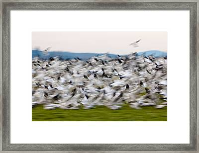 Blurry Birds In A Flurry L467 Framed Print by Yoshiki Nakamura