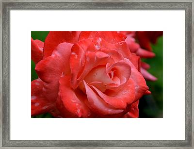 Blush After The Rain Framed Print