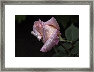 Blush Framed Print by Doug Norkum