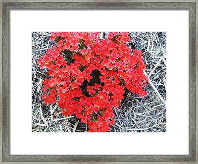 Blush Framed Print by Neil Trapp