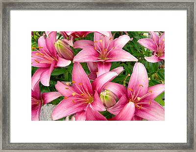Blush Of The Blossoms Framed Print