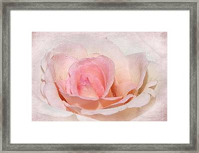 Blush Pink Dewy Rose Framed Print