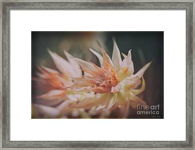Framed Print featuring the photograph Blushing Bride by Linda Lees
