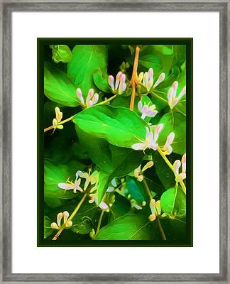 Blushing Honeysuckle Blooms Framed Print