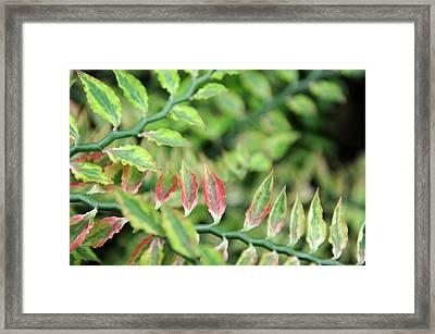 Blushing Leaves Framed Print by Jessica Rose