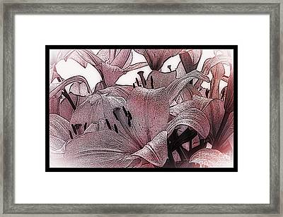 Blushing Lilies Framed Print