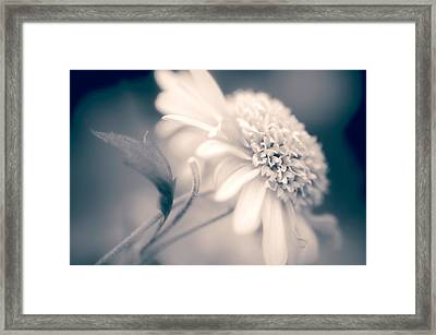 Framed Print featuring the photograph Blushing Mum by Julie Palencia