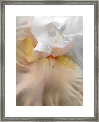 Blushing Peach Iris Flower Framed Print