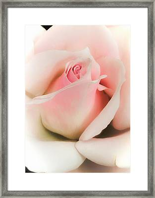 Blushing Petals Framed Print