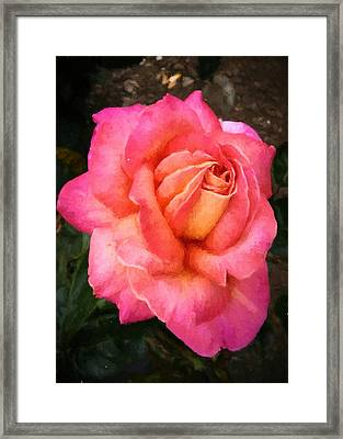 Blushing Rose Framed Print
