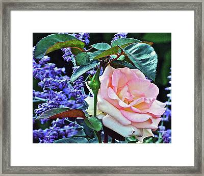 Framed Print featuring the photograph Blushing Rose by Janis Nussbaum Senungetuk