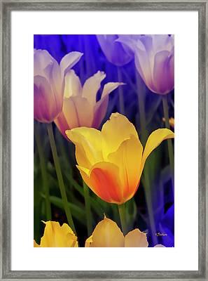Blushing Tulips Framed Print by Kat Besthorn