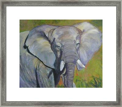 Bo Bo The Elephant Framed Print
