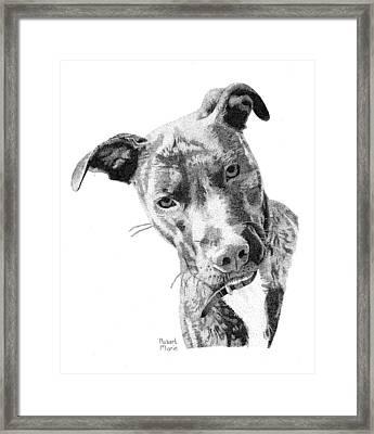 Bo Framed Print