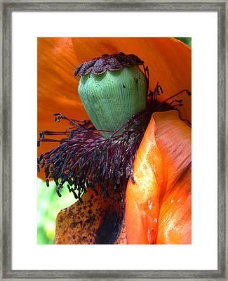Boa And Bonnet Of Madame Poppy Framed Print