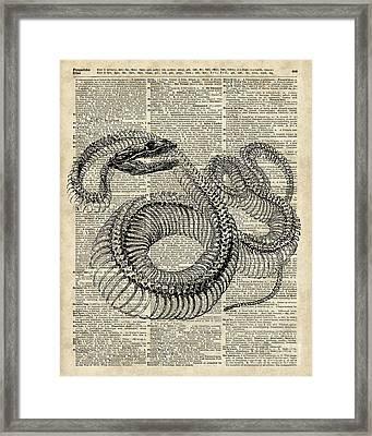 Boa Snake Skielet An Dictionary Page Framed Print by Jacob Kuch