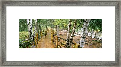 Boardwalk Along A River, Gooseberry Framed Print by Panoramic Images