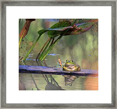 Boardwalk Framed Print by Donna Kennedy