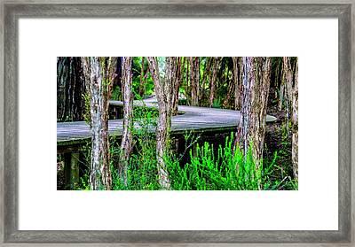Boardwalk In The Woods Framed Print