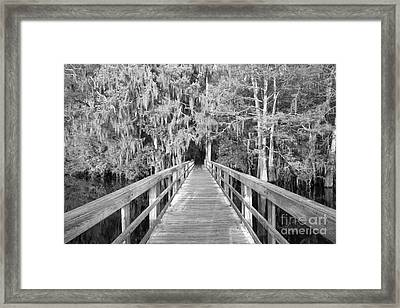 Boardwalk Into The Cypress In Black And White Framed Print by Adam Jewell
