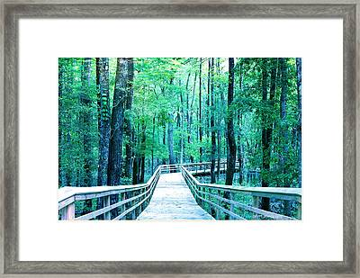 Boardwalk Into The Woods Framed Print by Chris Short