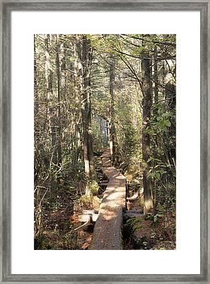 Boardwalk, Ponkapoag Pond Marsh Framed Print