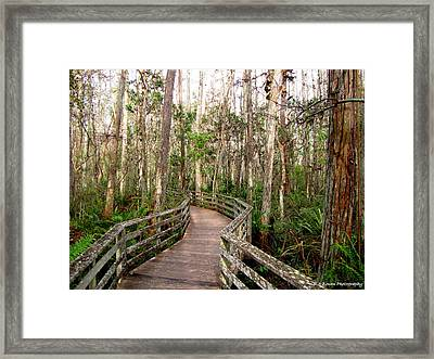 Framed Print featuring the photograph Boardwalk Through Corkscrew Swamp by Barbara Bowen