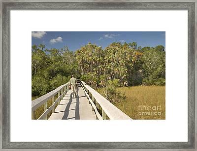 Boardwalk Through The Everglades Framed Print