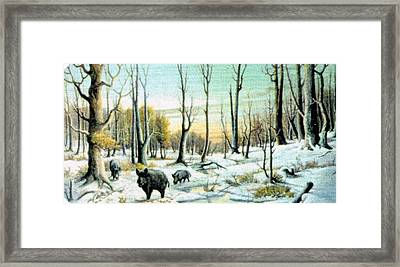 Boars In Winter - Sold Framed Print by Florentina Popa