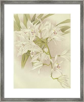 Boat Orchid  Cymbidium Framed Print by English School
