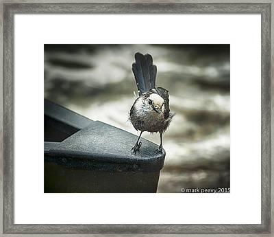 Boat Sparrow Framed Print