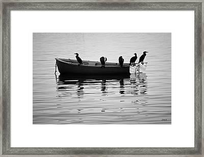 Boats And Cormorants Plymouth Harbor Bw Framed Print by David Gordon