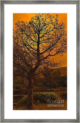 Boats At The Abbey Framed Print by Louise Fahy