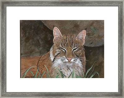 Bob Cat Framed Print by Peggy Conyers
