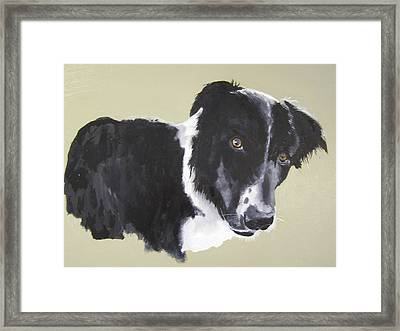 Bob The Border Collie Framed Print