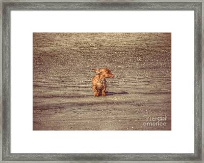 Bob The Boss Framed Print by Leah McPhail