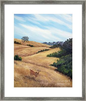 Bobcat At Rancho San Antonio Framed Print by Laura Iverson