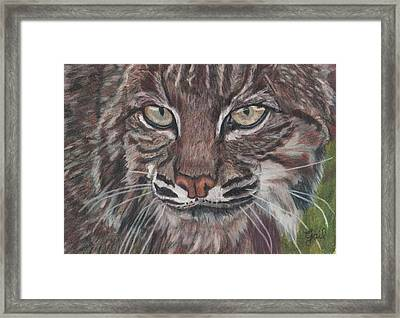 Bobcat Eyes Framed Print by Gail Seufferlein