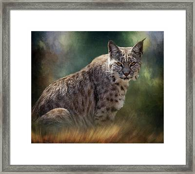 Bobcat Gaze Framed Print