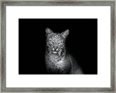 Bobcat In The Wild Framed Print