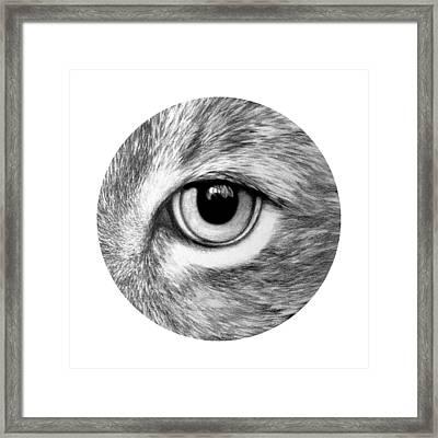 Bobcat Framed Print by Jay Garfinkle