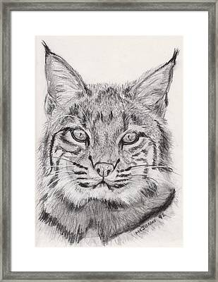 Bobcat Framed Print by Marqueta Graham