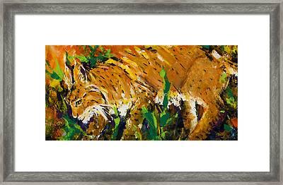 Bobcat Framed Print by Mary DuCharme