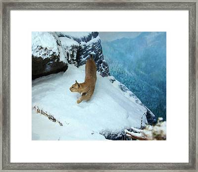 Bobcat On A Mountain Ledge Framed Print