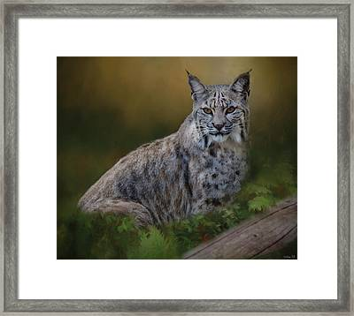 Bobcat On Alert Framed Print