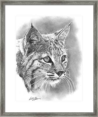 Bobcat Framed Print by Reed Palmer
