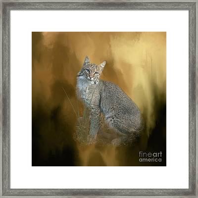 Bobcat Framed Print