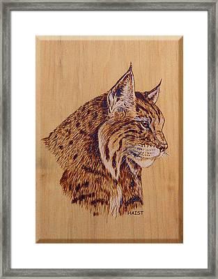 Bobcat Framed Print by Ron Haist