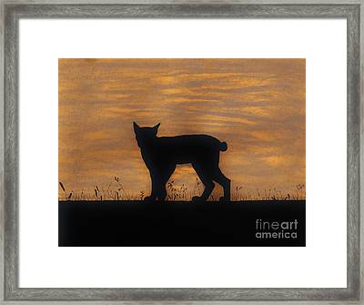 Bobcat - Sunset Framed Print by D Hackett