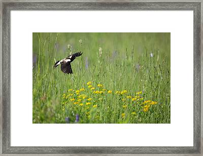 Framed Print featuring the photograph Bobolink In Paradise by Bill Wakeley
